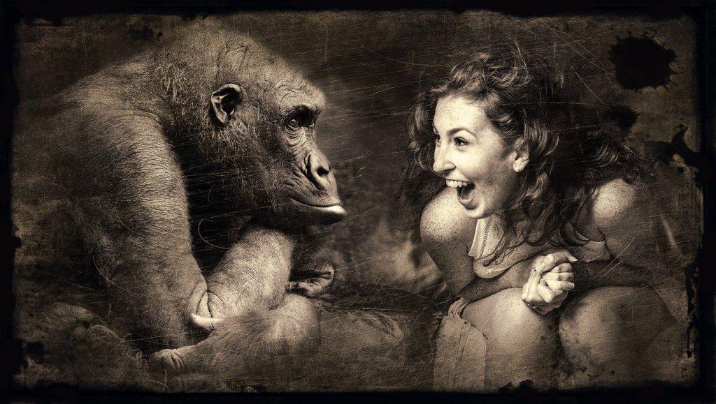 composing, monkey, woman